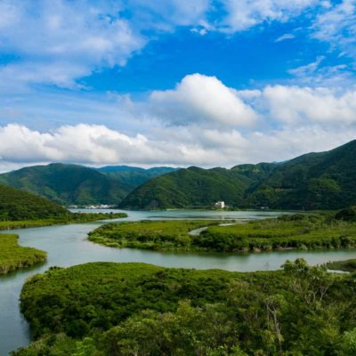Mangrove マングローブ原生林 ホンダレンタカー奄美空港店 写真